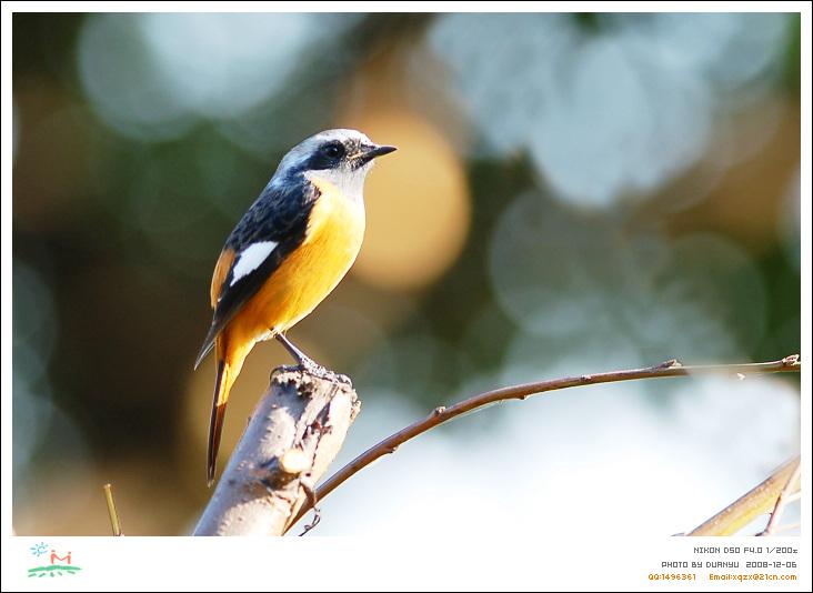 泰国鸟类野生保护